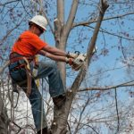 tree trimming handyman 321 outdoor repair